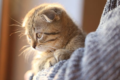 Cat Breed Companion: 5 Tips On Choosing The Best Breed