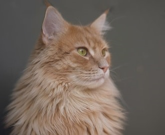 Choosing 6 Cat Shampoo and Conditioners For Your Tom
