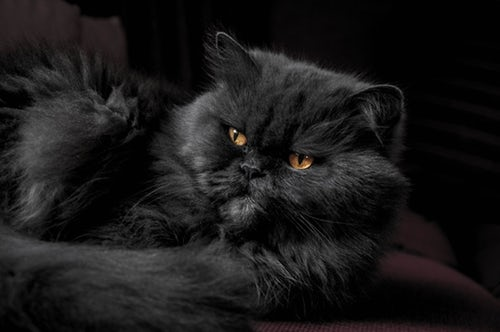 Top 3 Types of Cats You Will Surely Love