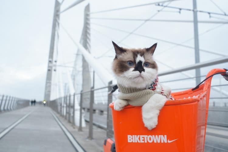 Bring Along Your Furry Friend With These 5 Cat Carriers