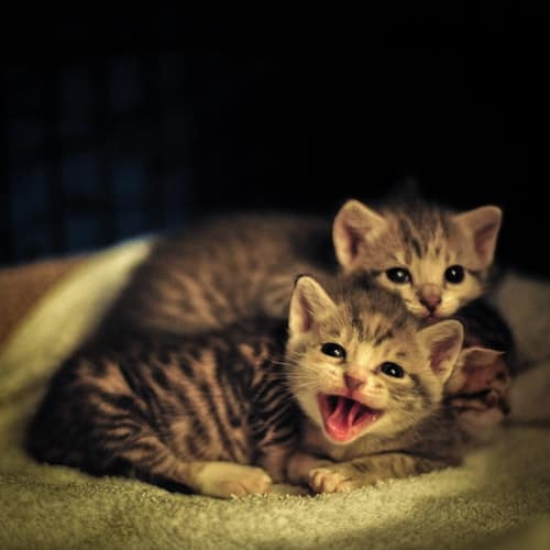 Effective Ways to Take Care of Your Baby Kittens