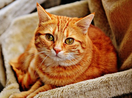 The Tabby Cat And Their Personality Traits