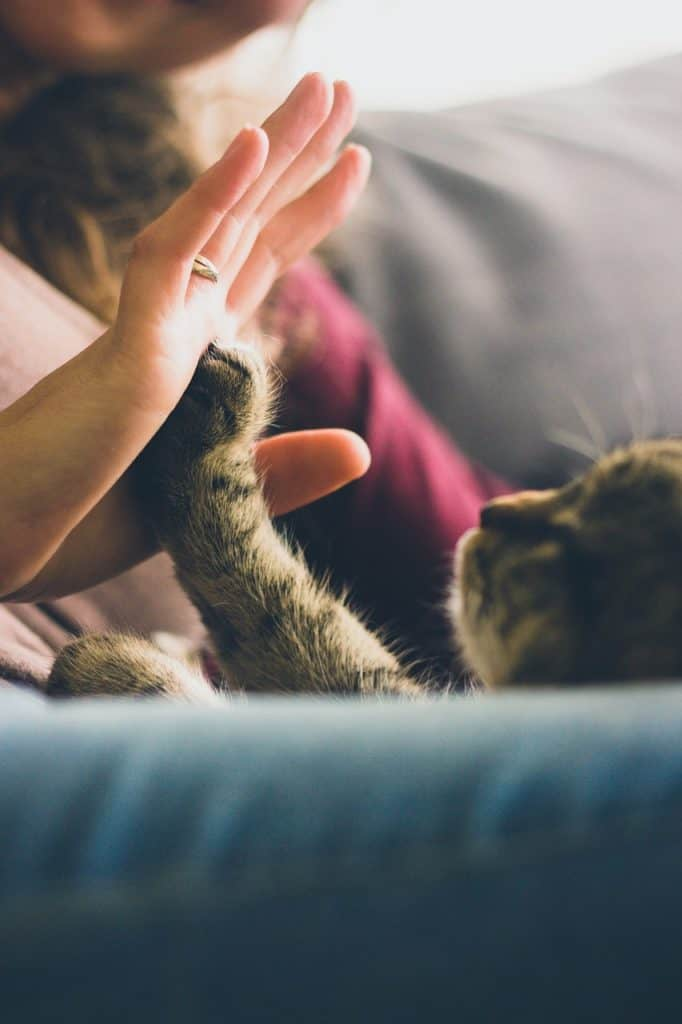 Why Are Cats The Best Pet Choice?