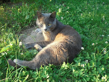 Fun Facts About Russian Blue Cat