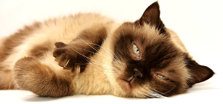 Pet Hygiene Products For Cats