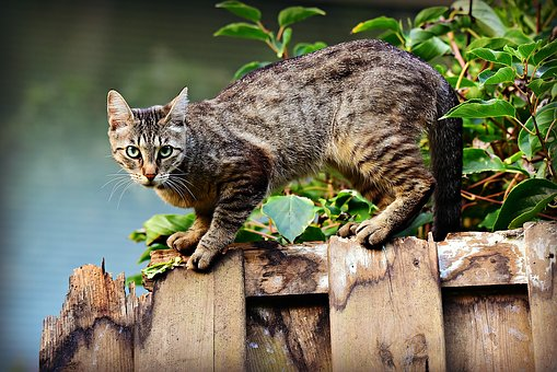 Your Cat's Healthy Skin And Coat: What To Know
