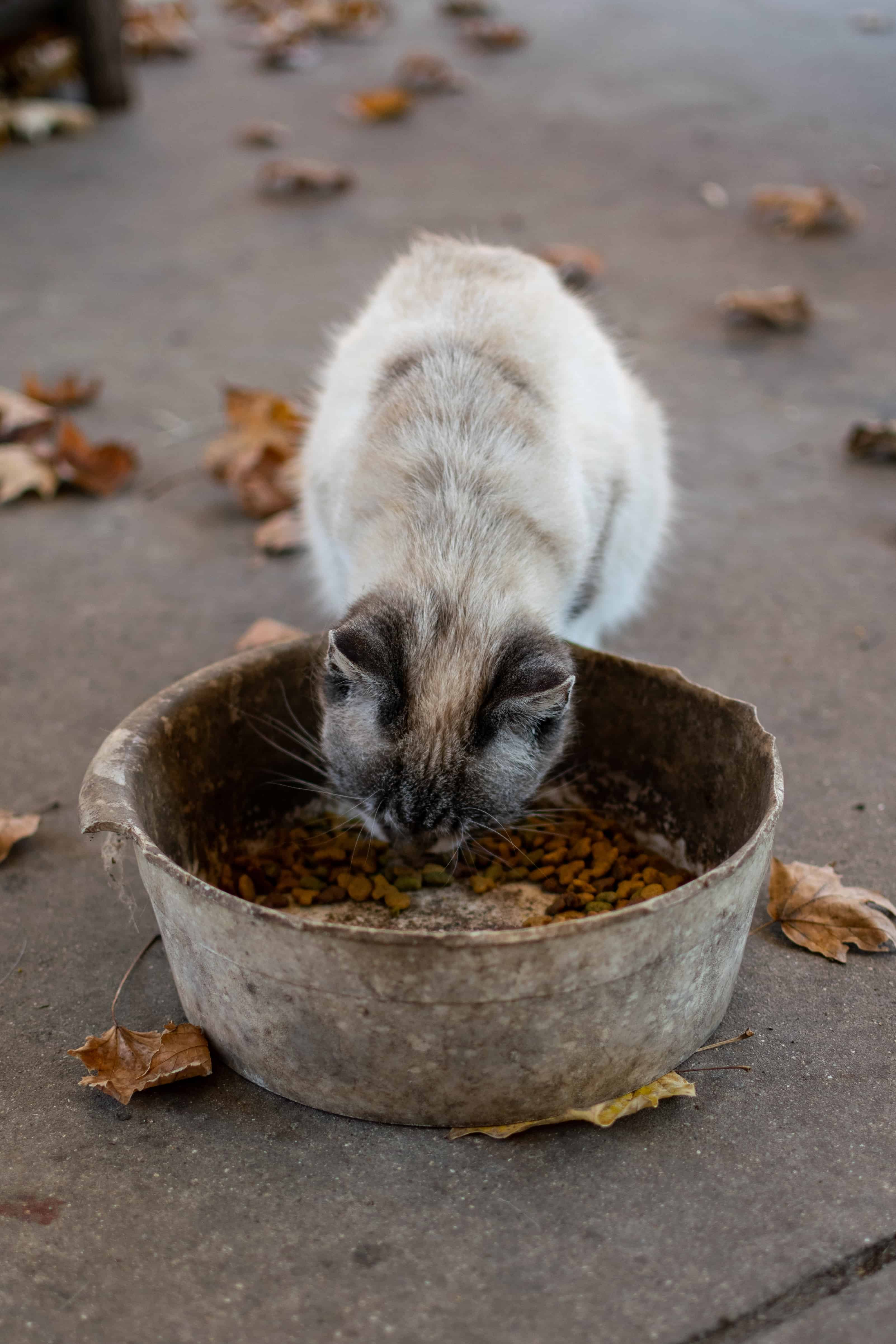 How Much Wet Food Should I Feed My Cat?