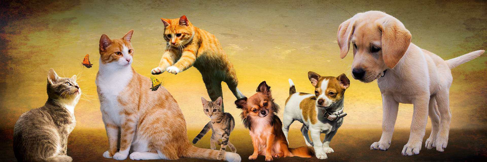Why Microchip Dogs And Cats: Top Reasons