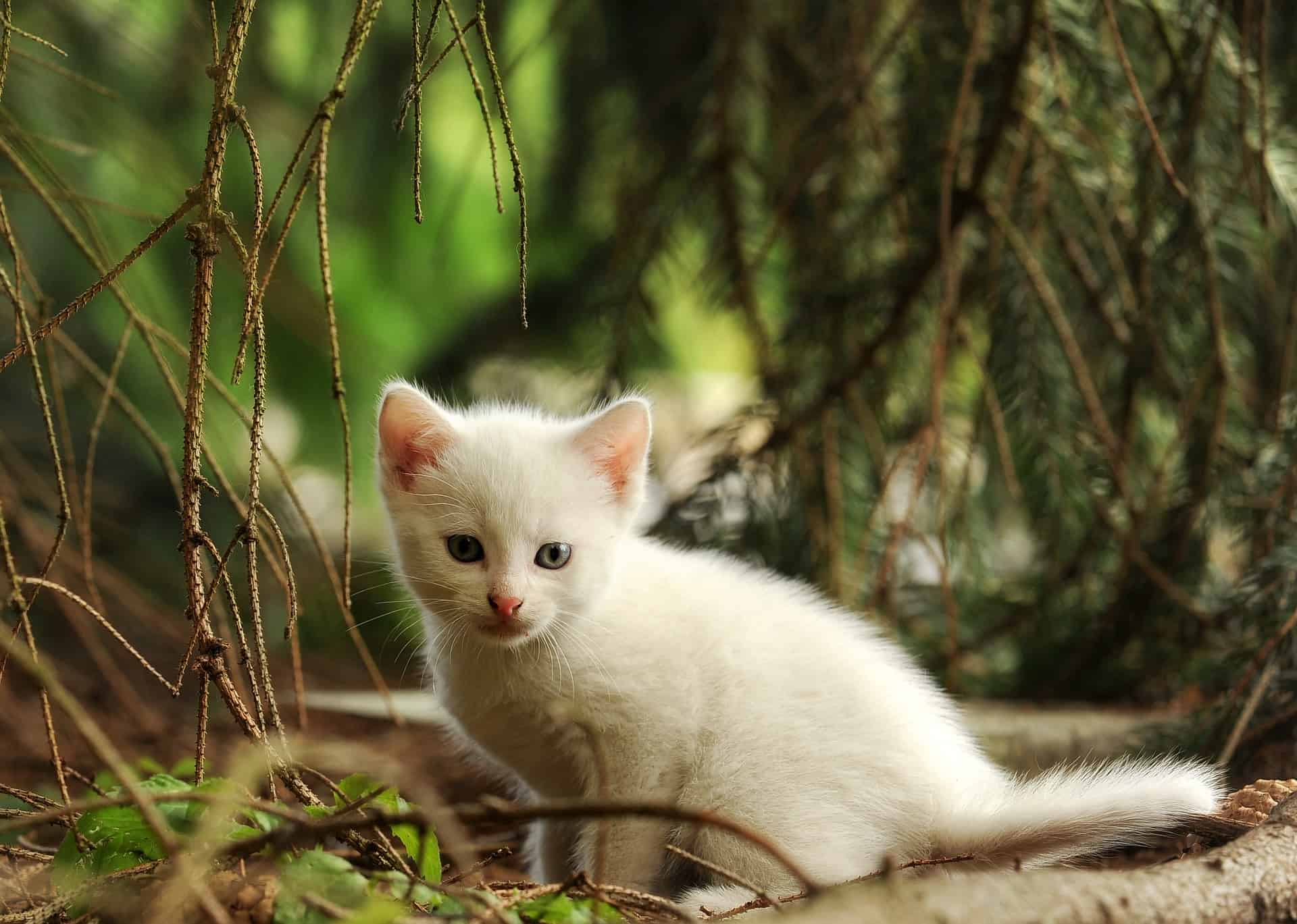The Needs Of Your New Kitten To Keep Them Fit