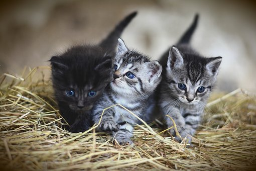 Kitty's Development: How To Deal With It Effectively