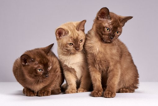 How Should you take care Of Kittens Once They Are Born and Ever After?