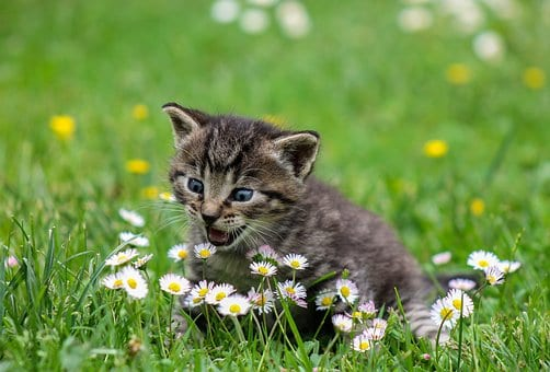 Kitten Feeding Tips - Here Are The Top Seven