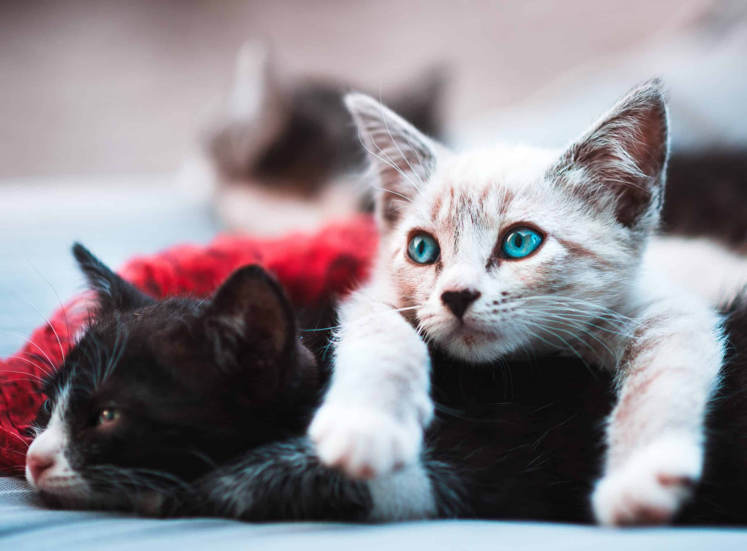 Kitten Care: Must-Know Tips For Taking Care Of Kittens