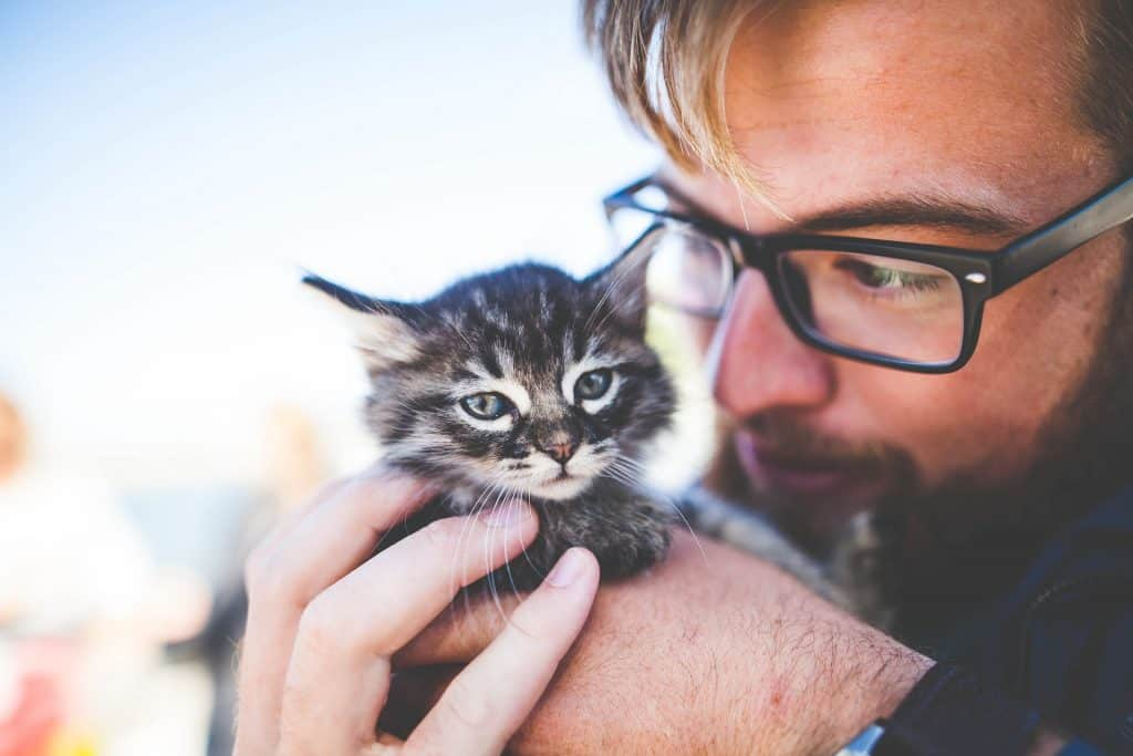 Study Finds Kittens Bond With Their Human Caregivers Like Babies Do