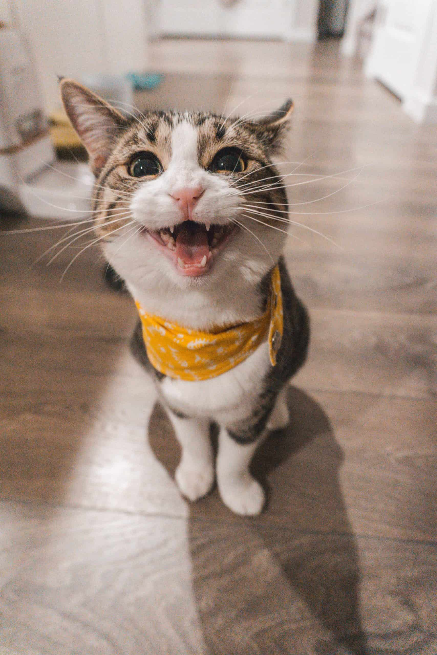 Cat Bites And Scratches: Treatment And Precaution