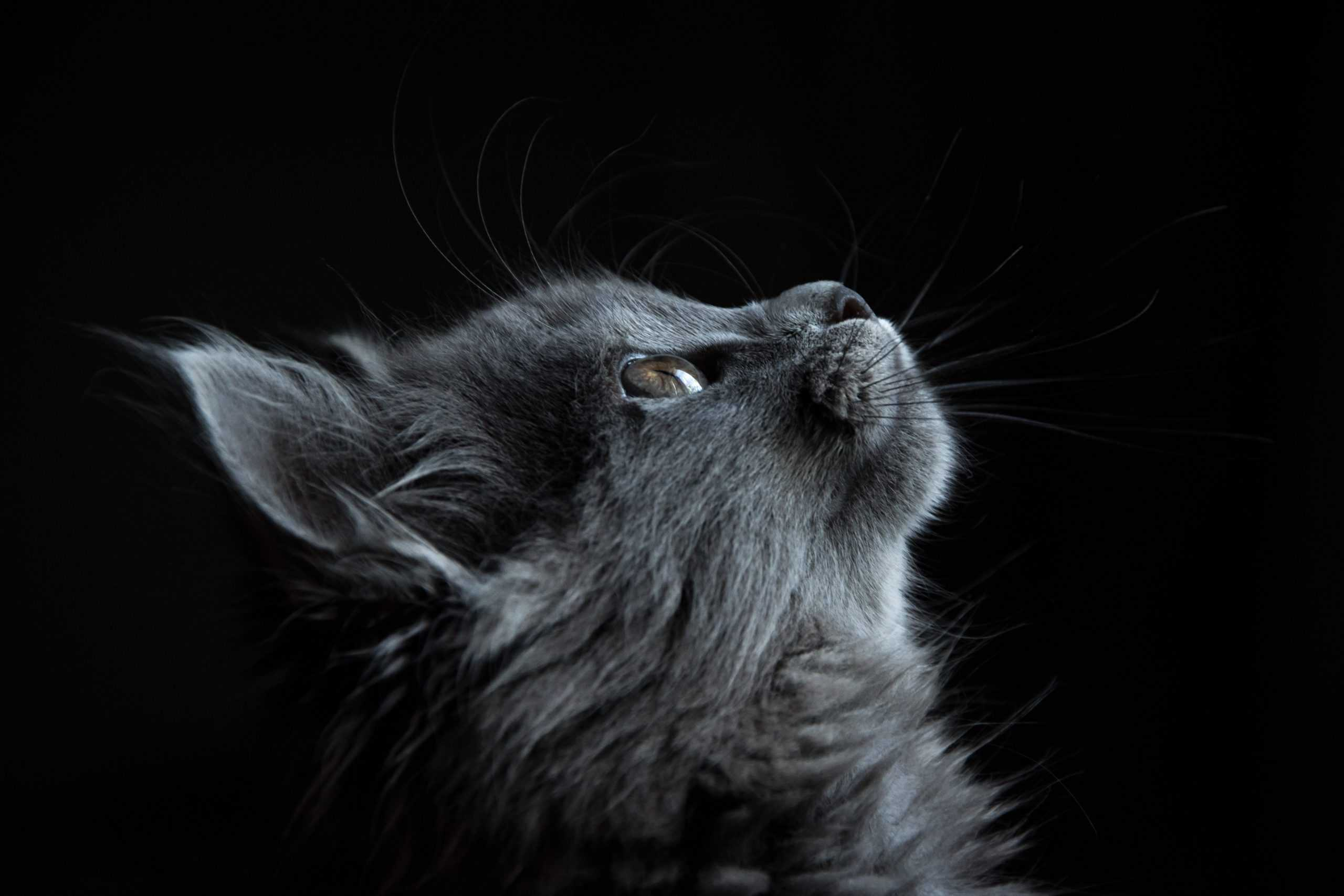 Tips In Helping The People With Cat Allergies