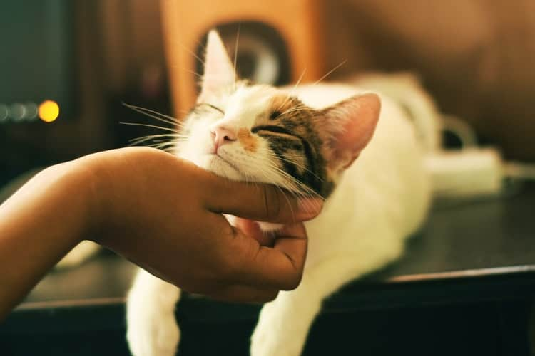 Tips To Choose A Water Bowl For Your Cat