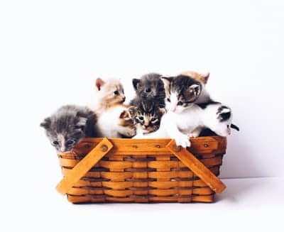Everything You Need To Know About Kittens Rescue