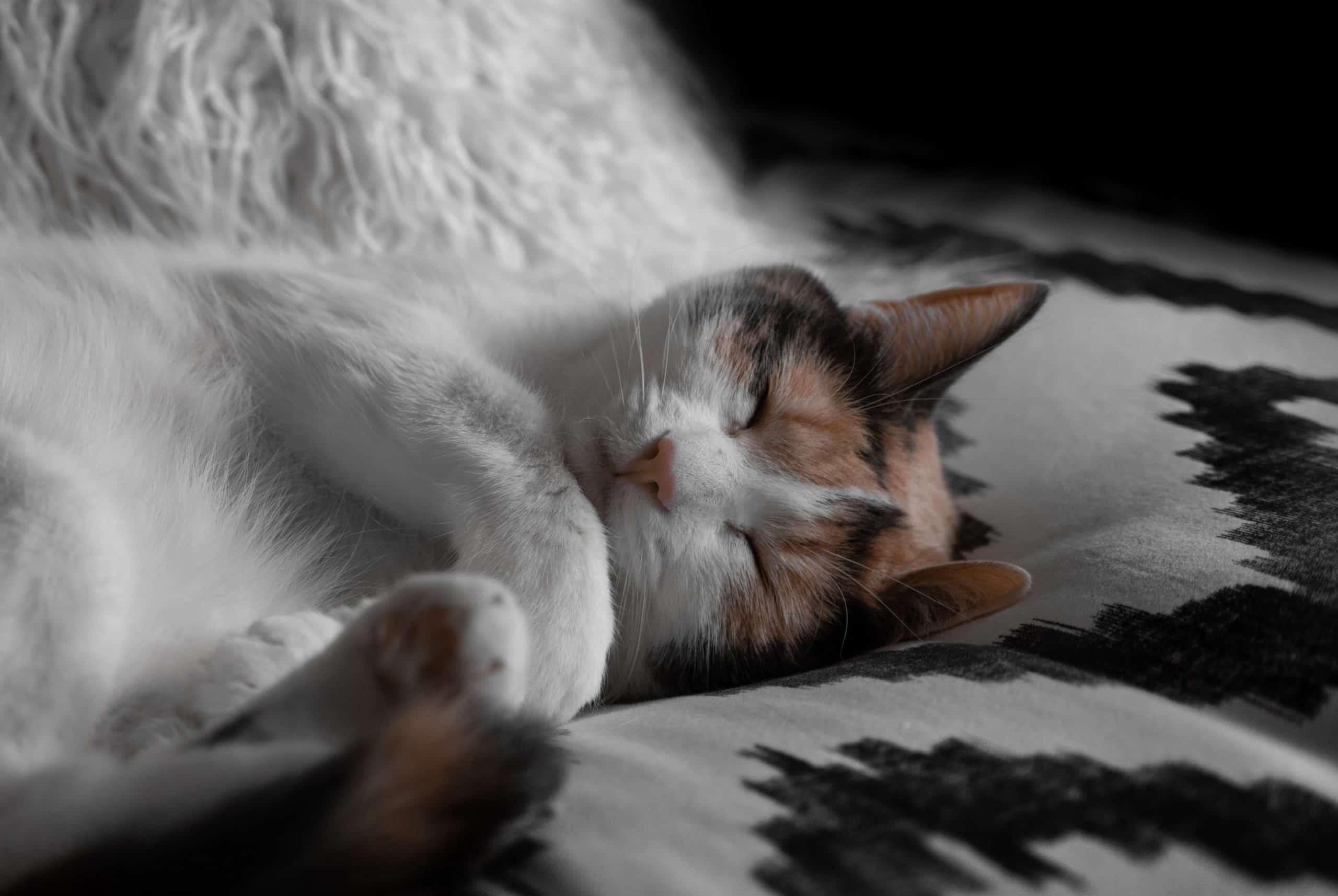 Reasons Why You Should Purchase a Pet Cat Beds