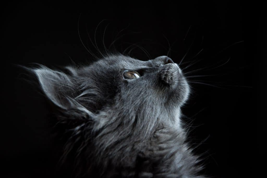 Information And Facts On Black Cats