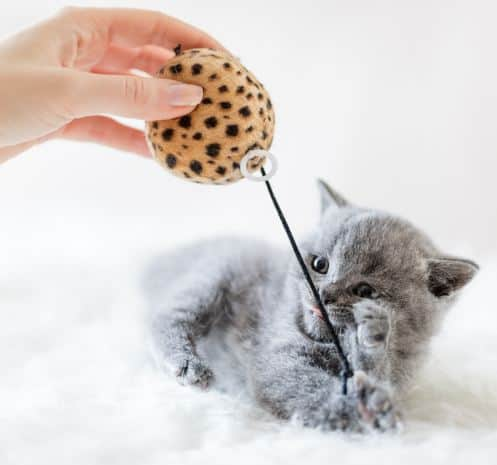 Development Of Kittens: How Well You Know Your Pet?
