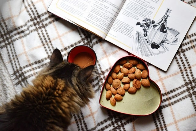 Cat Care Tips for Pregnant Cats