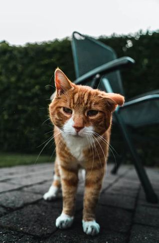 Does Your Geriatric Cat Exhibit Signs Of Aging?