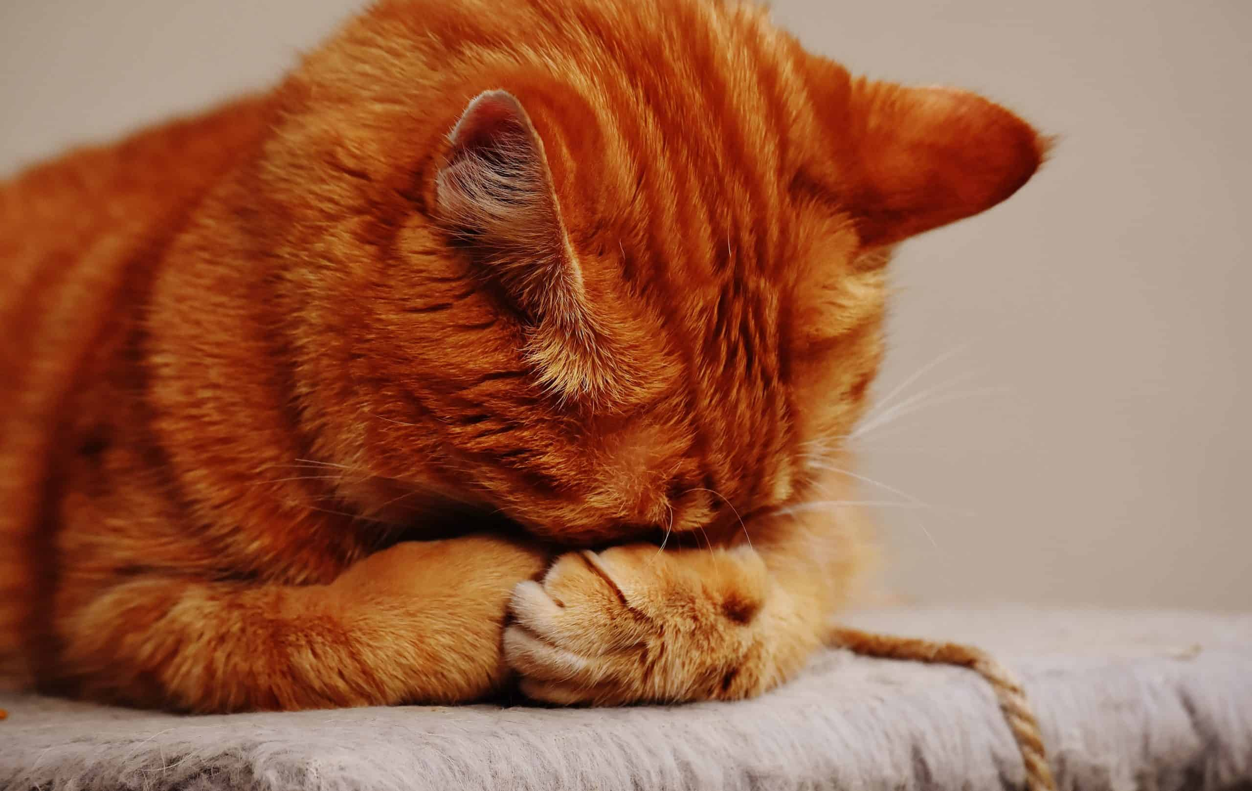 Cat Care Tips - How To Keep Your Cat From Being A Super-Playful Cat