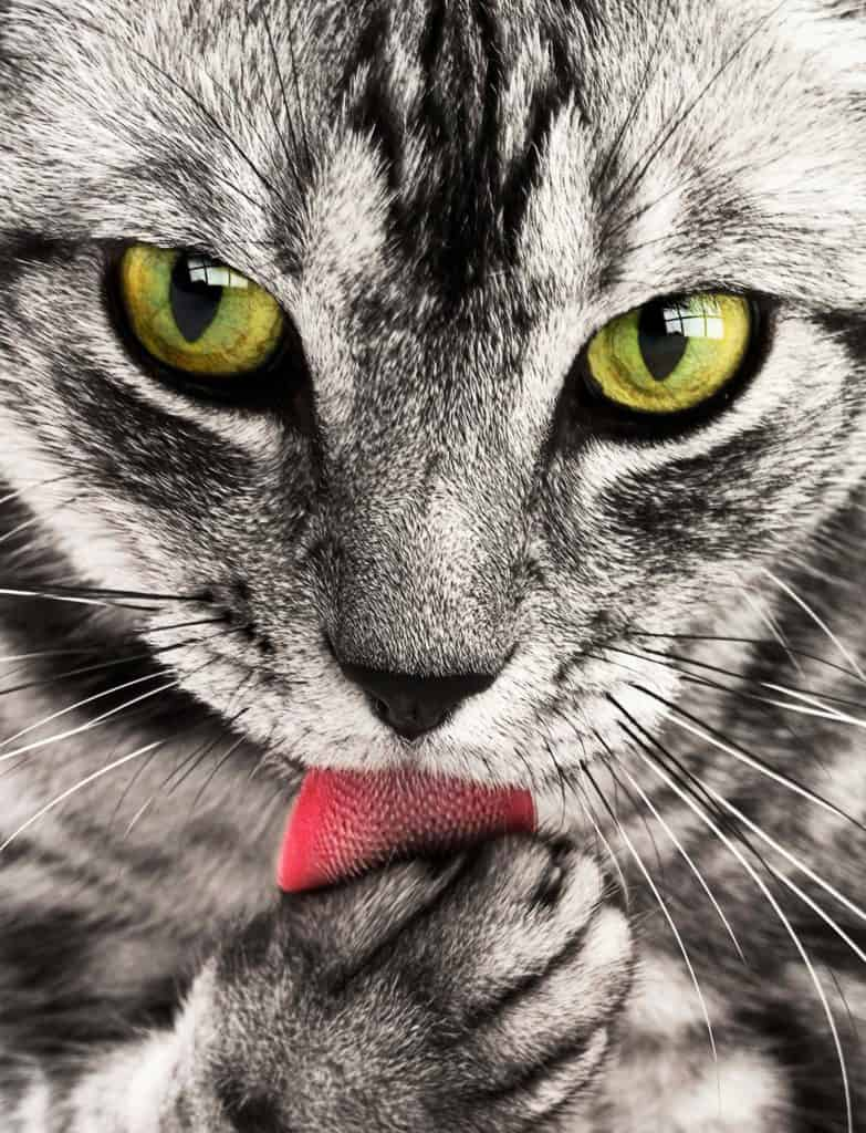 Cat Grooming For A Healthier And Lighter Coated Cats