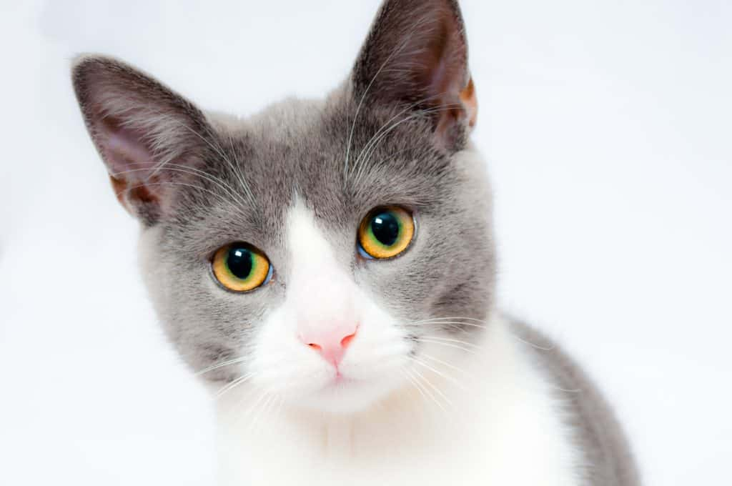 Kitty Training Plan For Different Cat Breeds
