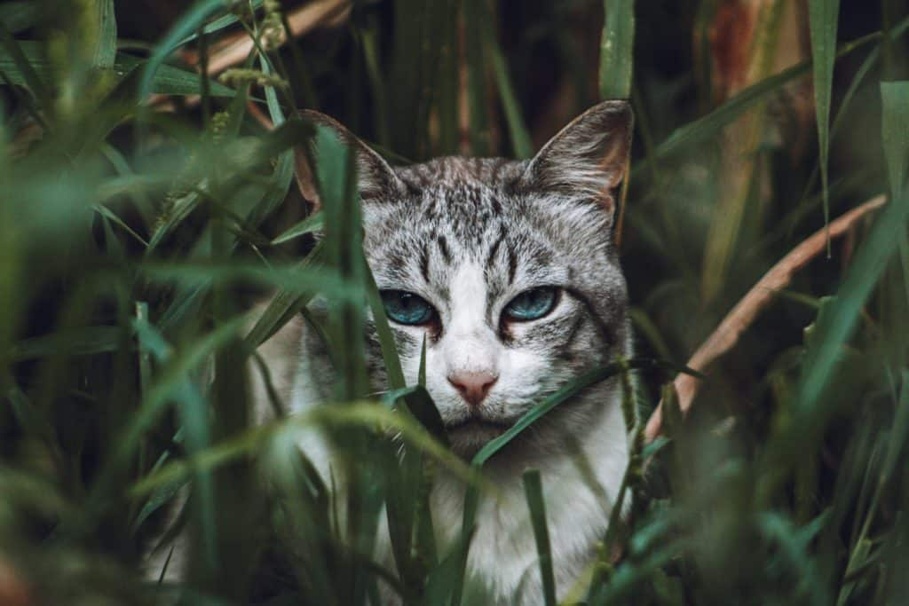 Raise Tabby Cats: What Are The Possible Risks?