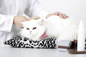 Grooming Tools For Cats – A Guide To Cat Grooming