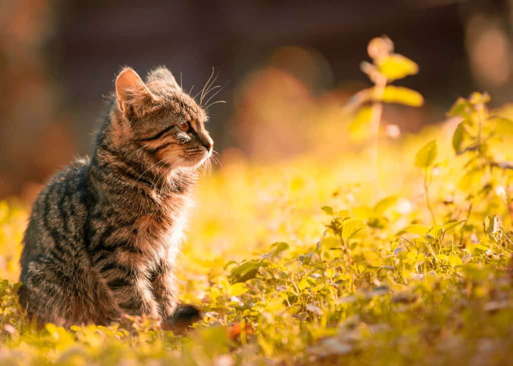Kitten's Diet: Feeding Your Cat With A Variety Of Treats