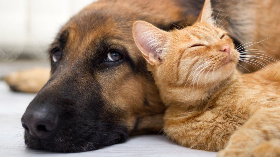 ideas for keeping your pets safe
