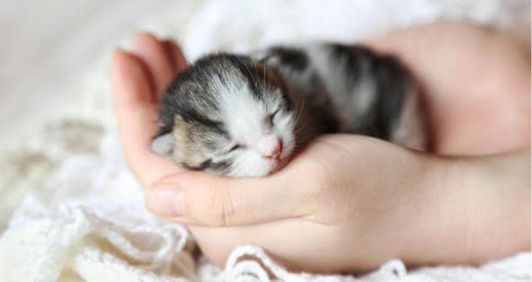 newborn kitten care ideas for you your pets