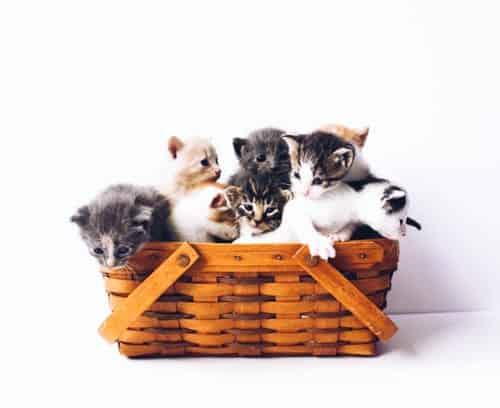 The Importance of Enhancing New Kitten Care