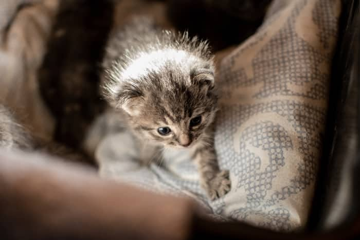 Things to consider before picking potty training kittens