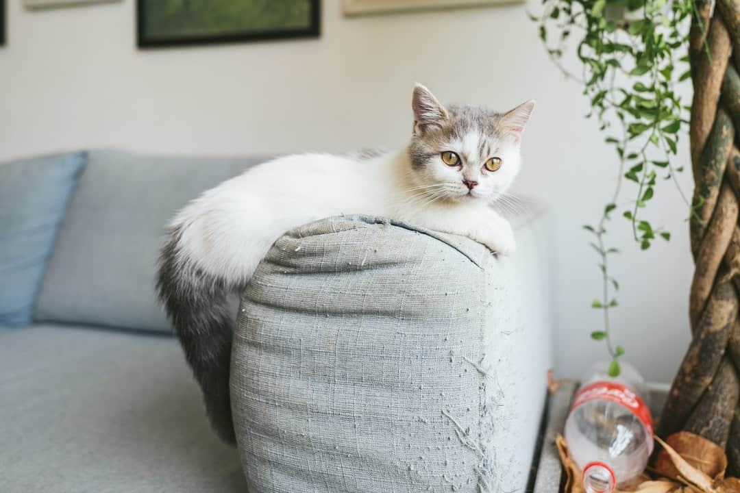 A cat sitting on a couch