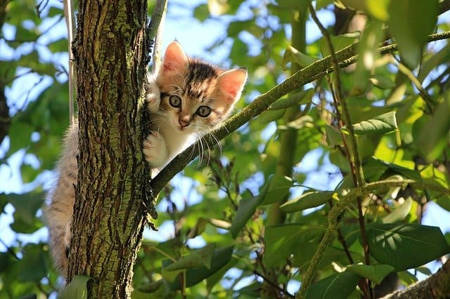 A cat sitting on a tree branch