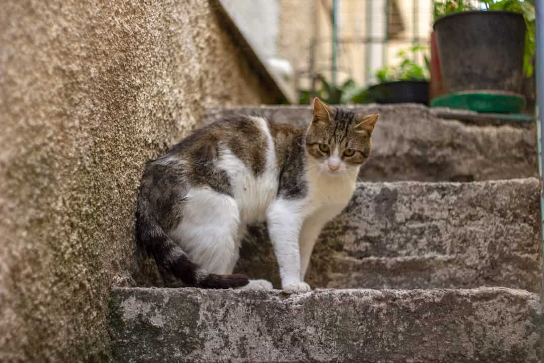 A cat that is standing in front of a brick building