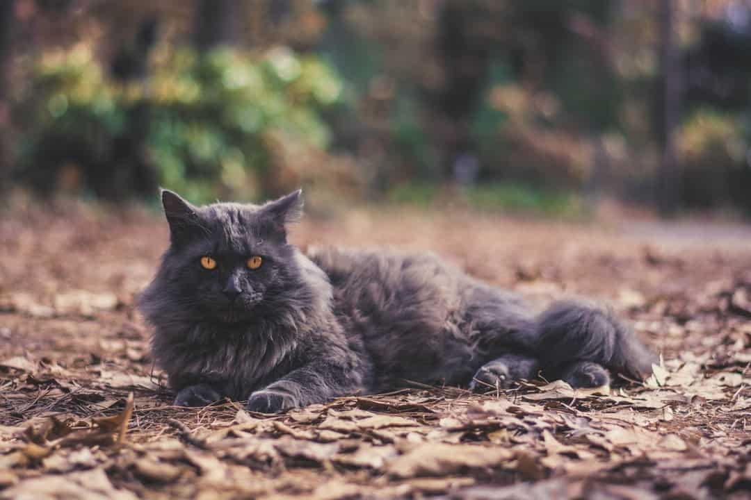 A cat lying on top of a dirt field