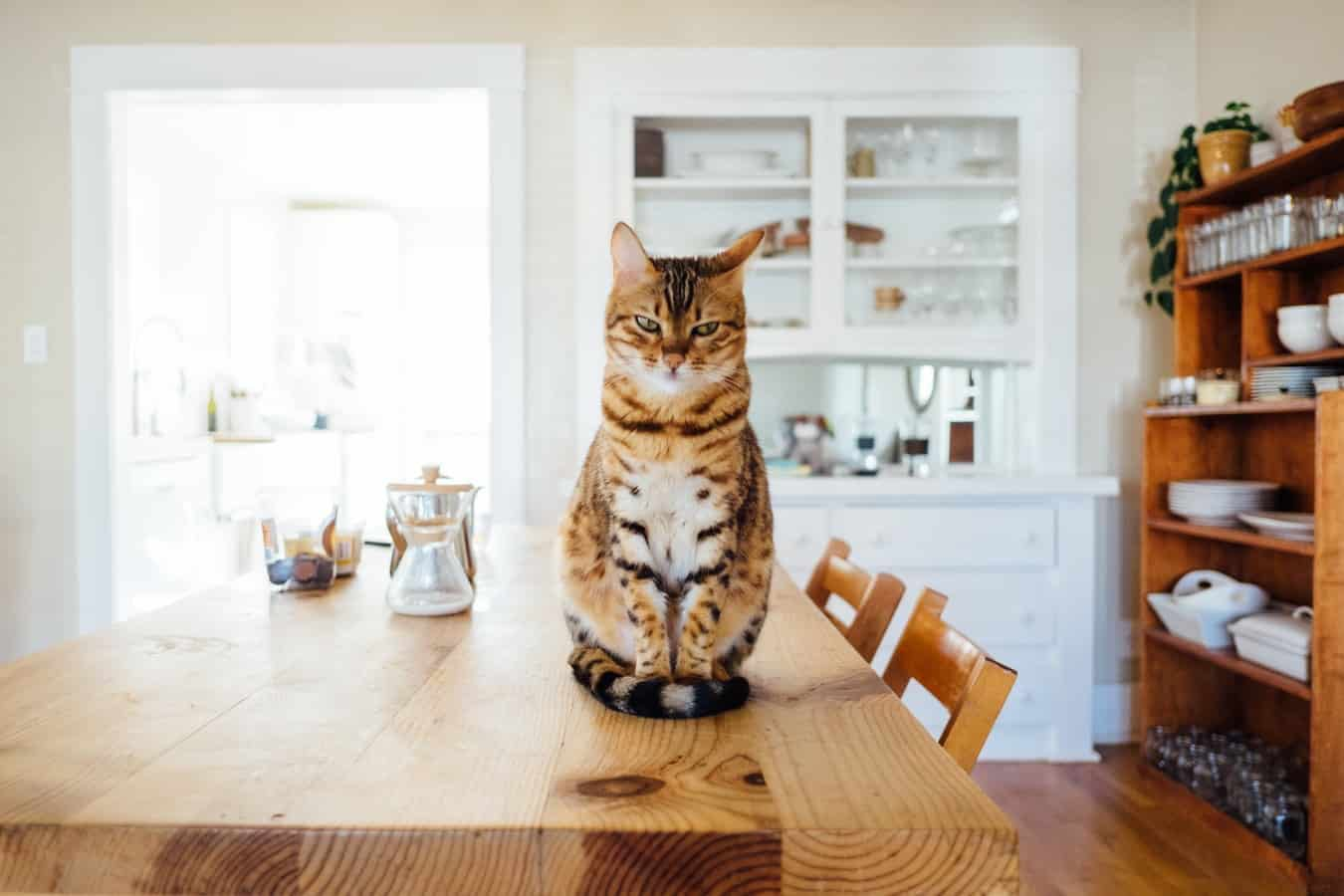 A cat sitting on top of a wooden table