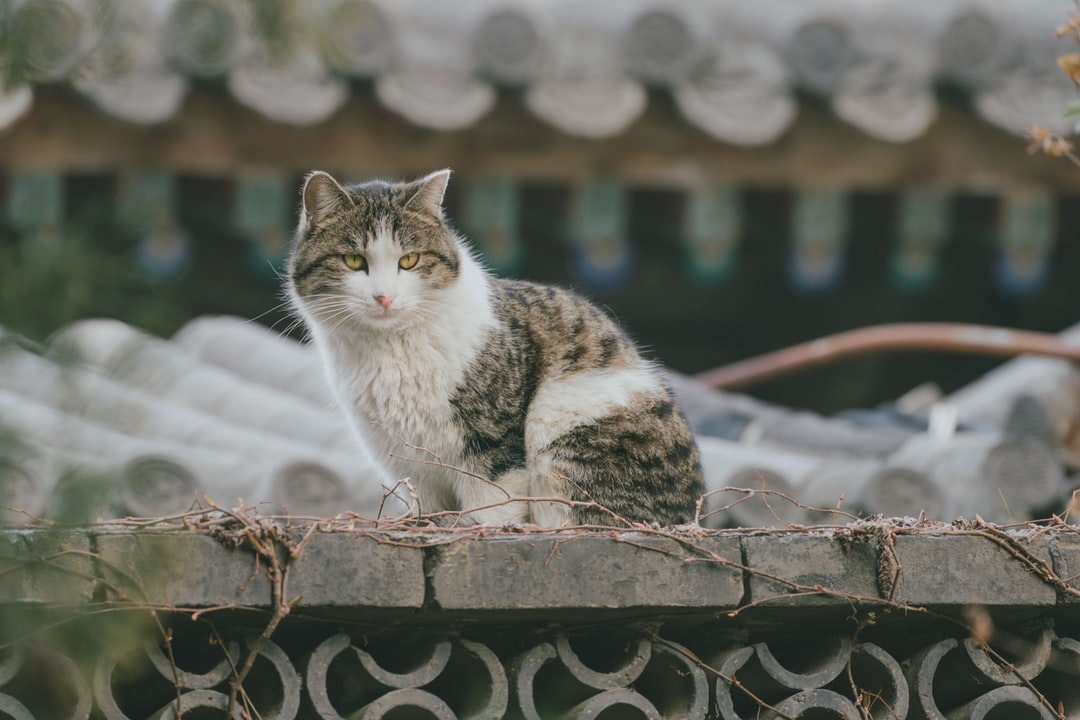 A cat sitting on top of a metal fence